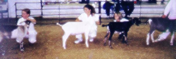 Dawna Showing Pet Wether, 1998 Wayne County Fair